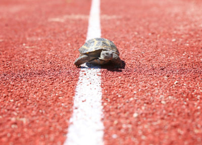 A turtle on a race track